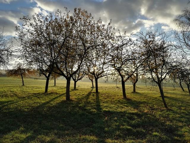 Apfelbäume im Gegenlicht