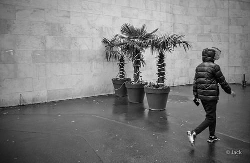 les trois palmiers