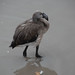 "<p><a href=""https://www.flickr.com/people/fberbers/"">Frank Berbers</a> posted a photo:</p>  <p><a href=""https://www.flickr.com/photos/fberbers/50638623756/"" title=""Grote flamingo (Phoenicopterus roseus) | GaiaZOO Kerkrade""><img src=""https://live.staticflickr.com/65535/50638623756_6a1f7114c7_m.jpg"" width=""160"" height=""240"" alt=""Grote flamingo (Phoenicopterus roseus) | GaiaZOO Kerkrade"" /></a></p>  <p>D56_0939</p>"