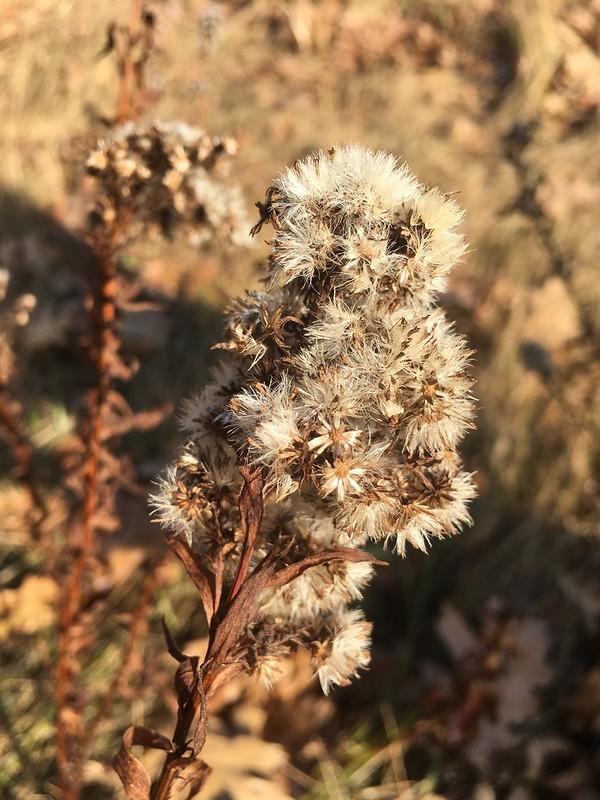 Outside in November