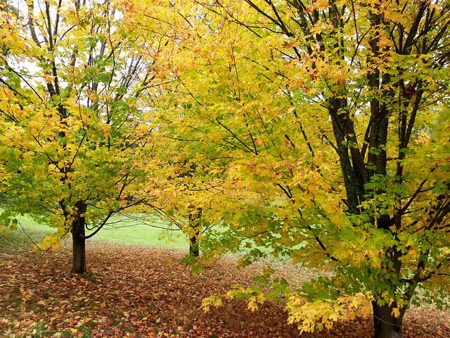 Autumn colour_(20201013_115343)