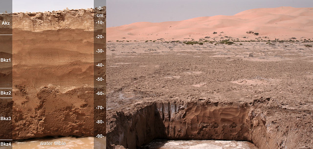 AD130 Typic Aquisalids, lithic UAE