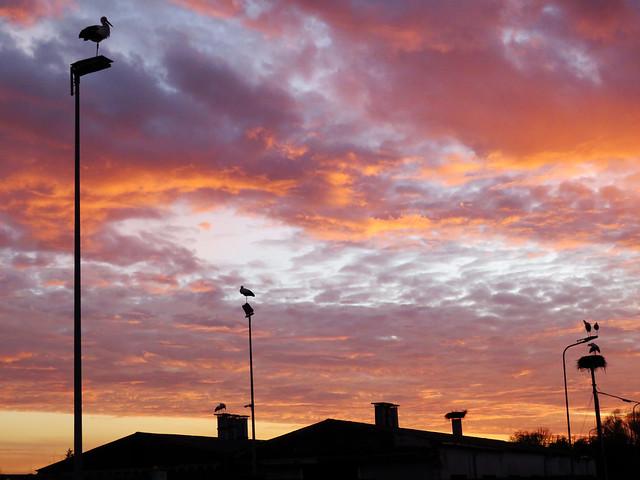 IMG_5972 sunset storks