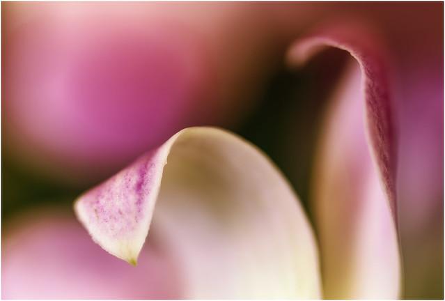 Singapore Orchid 2020-11-23 (5D4_7549-50)
