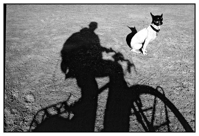 the dog and myself....