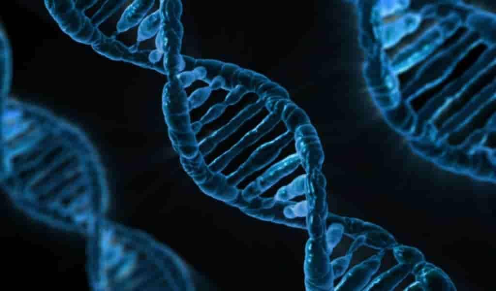 un-nouveau-lien-entre-la-démence-Alzheimer-et-un-gène