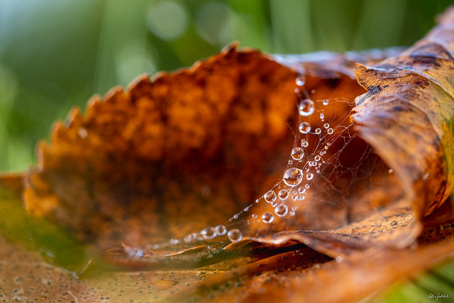 autumn impressions - water drops and leaves