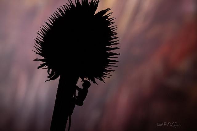 Spiky Climb