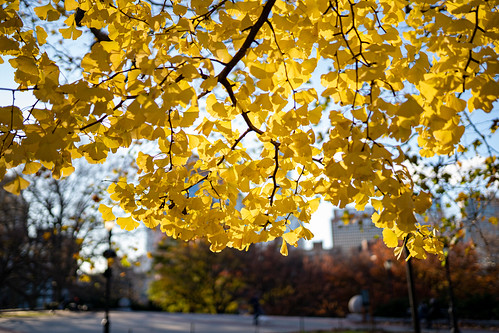 Ginkgo | by thoth1618
