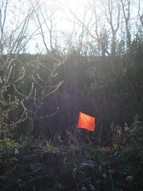 Letzter Lichtfang / Flagging the Sun