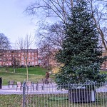 Christmas tree at Winckley Square, Preston