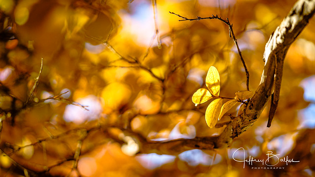 Yellow Leaves  hanging on