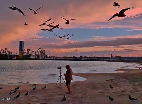 longbeachcalifornia light longbeachgranprix lbmarina lifeguardstation grissomisland shore sky sunrise shorefront seagulls pelican