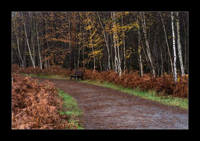 Herbst in der Heide (4)