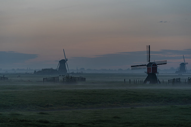 Dutch dawn