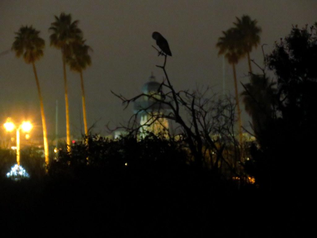 Tyto after dark