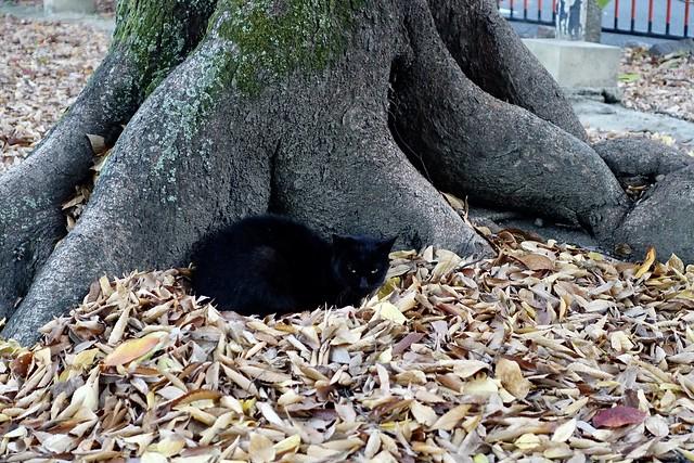 Today's Cat@2020−11−24
