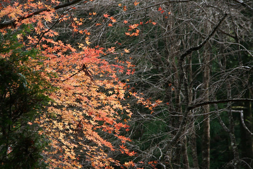 駒ヶ根 光前寺の紅葉