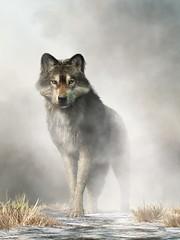 Wolf in Fog