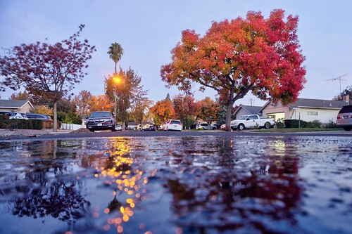 cupertino sanjose california usa siliconvalley sanfranciscobay sanfranciscobayarea southbay tree chinesepistache fall color autumn autumncolor house home outdoor reflection water waterreflection sky clear dusk bluehour night sony a6000sony a6000 selp1650 3xp raw photomatix hdr qualityhdr qualityhdrphotography fav200