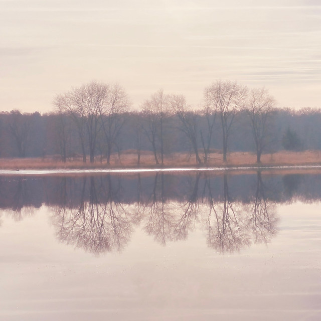 The Trees Reflect Their Beauty in the Lake