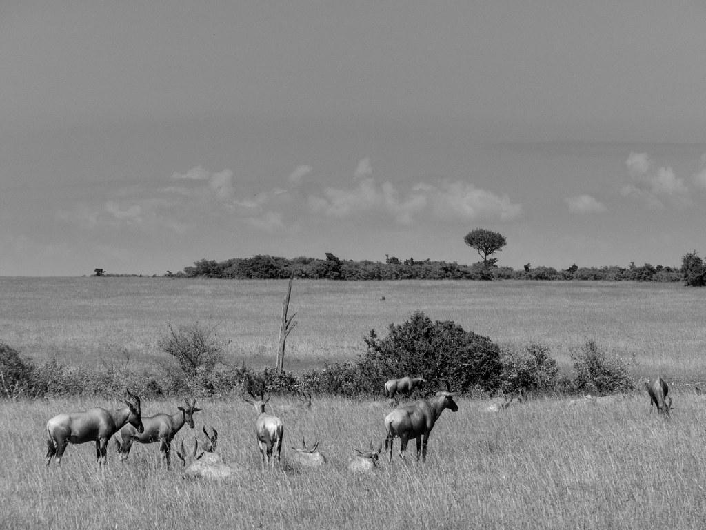 Family meeting in Masai Mara