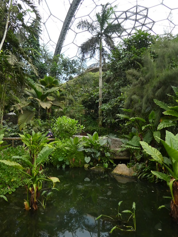 The Rainforest Biome, Eden Project