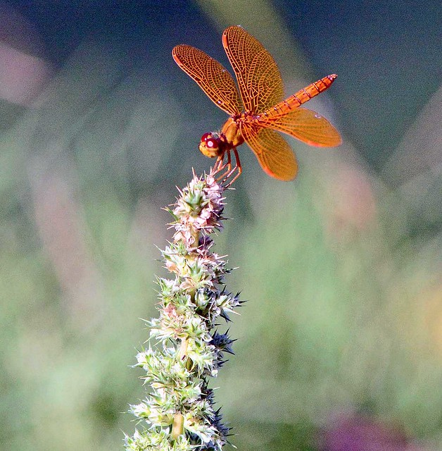 """""""Dragonflies are reminders that we are light and we can reflect light in powerful ways if we choose to do so."""" ― Robyn Nola"""