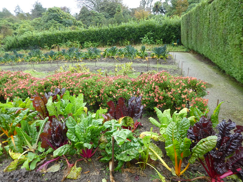 Kitchen garden, Lost Gardens of Heligan
