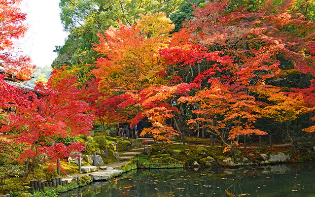 Autumn leaves around a pond in a temple in Kyoto