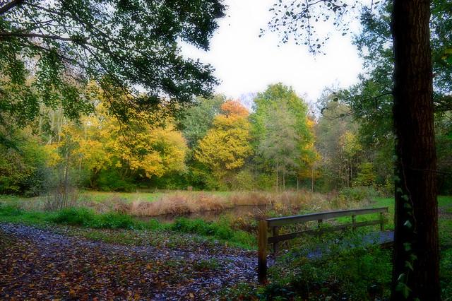 Autumn. Streekbos Bovenkarspel. Netherlands.