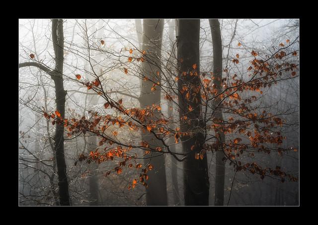 Morgenlicht / Morning Light