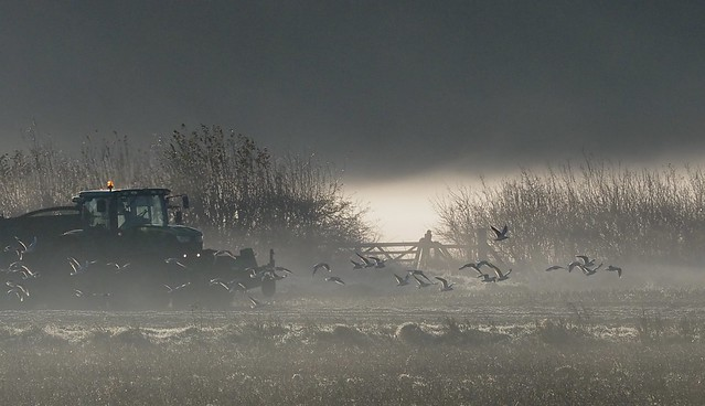 Field work. Mist and frost in late autumn.