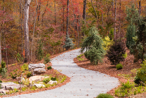 landscape woodland forest trees foliage orange yellow leaves path curves outside outdoor nature november gibbsgardens exploring canon coth5 ngc npc outstandingromanianphotographers