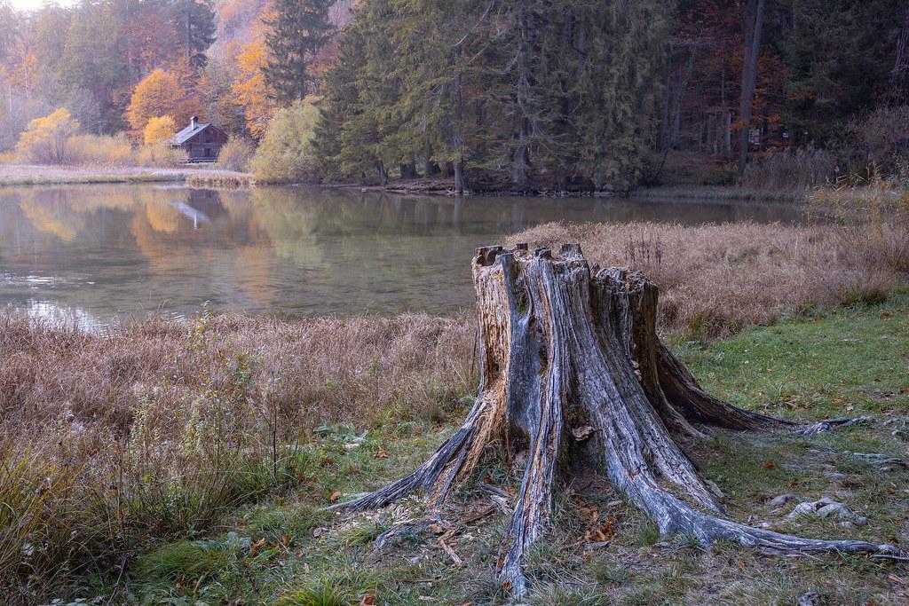 Lumberjack's house...