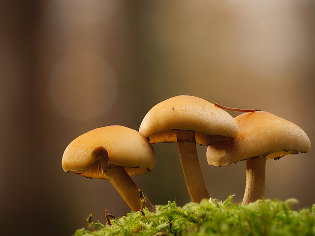 Die Drei vom Walde