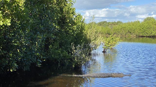 Florida Gator 🐊