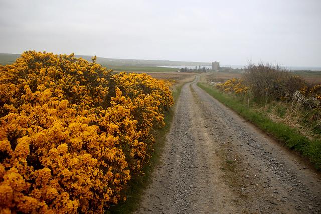 Track to Freswick Castle