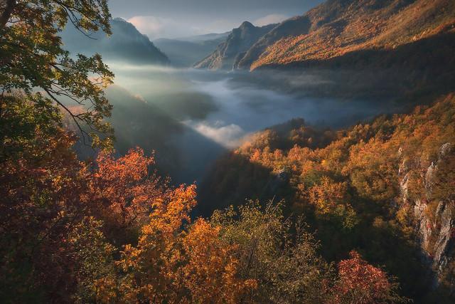 Autumn rhapsody II