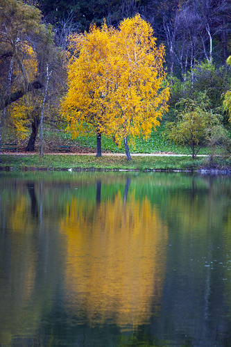 landscape sector4 românia bucurești park lake reflections nature colors autumn fall outside tree water