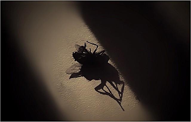 Deepfake dead fly