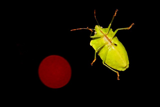 Crippled bug and red light
