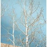 New Mexico 159