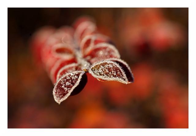 Erster Frost auf Rot