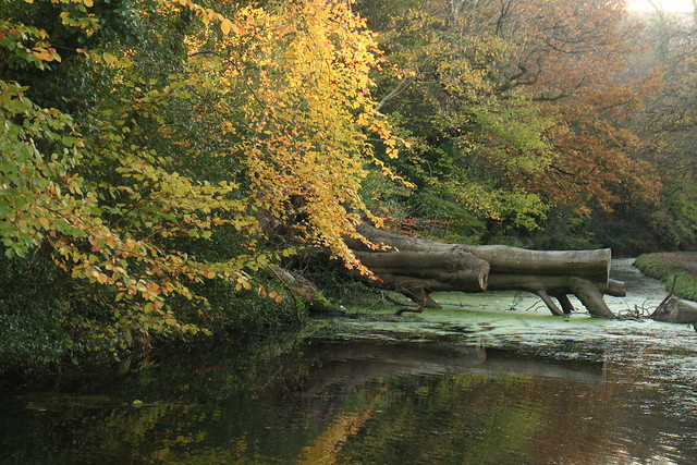 Autumnal Canal