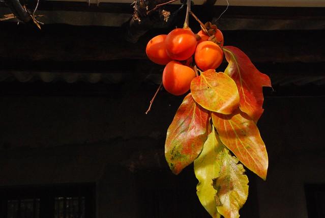 Pérsimon-Caqui. La fruta del tiempo
