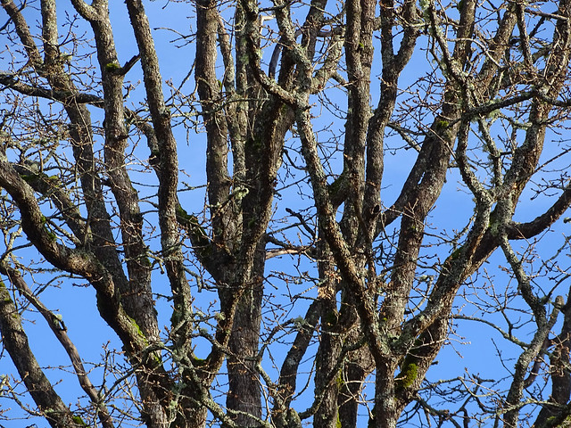 In explore...November 26, 2020, Oak trees have lost their leaves