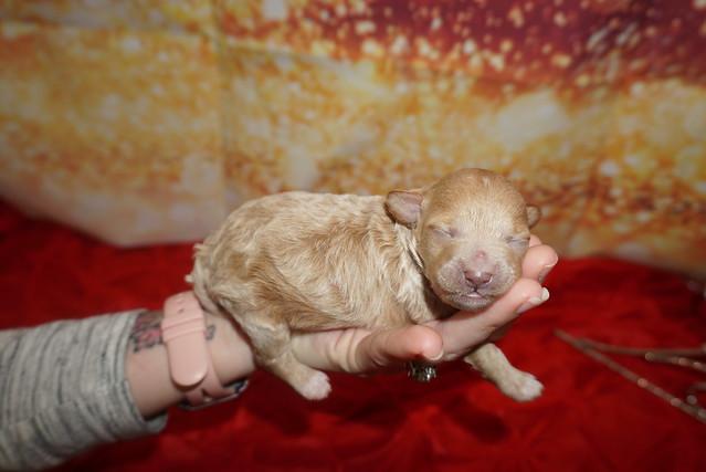 1 Maggie 9.8oz 4 days old (2)