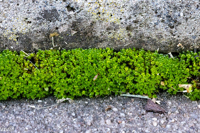 Moss flourishing at tread and riser junction of exposed stairs