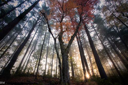 vrooked springs massachusetts new england nature hiking landscape fog